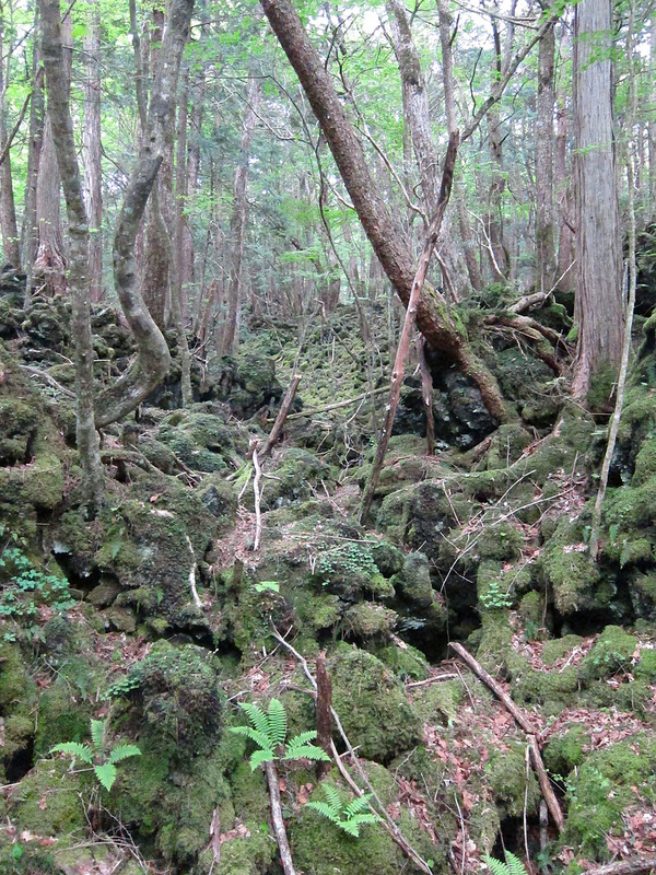 Aokigahara Forest Density