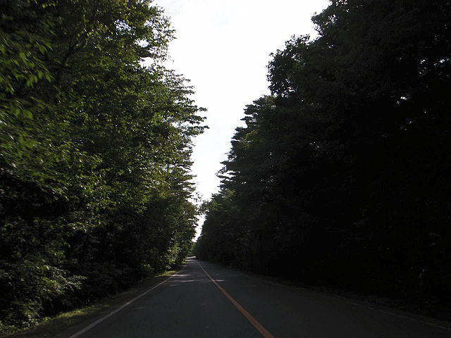 Aokigahara forest, the road